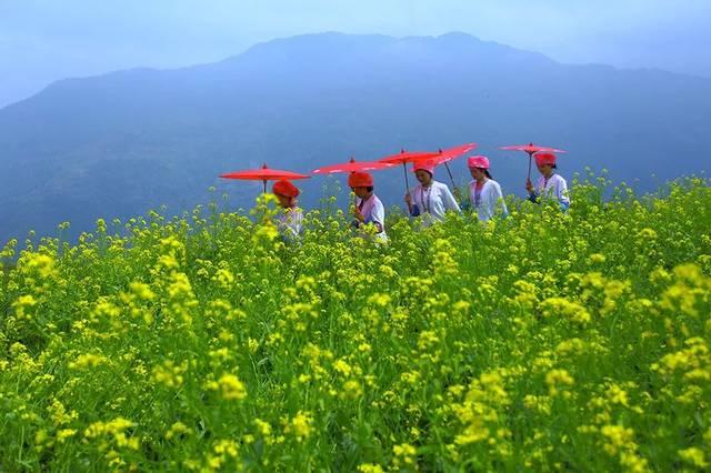 [约会春天] 你来看花,我在龙脊梯田等你来!
